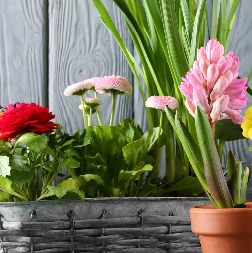 Our Potted Plants Gift Ideas for Bosses & Co-Workers